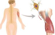 Anvisa concede registro a medicamento para Atrofia Muscular Espinhal