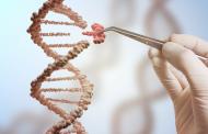 Tecnologia diagnostica ganha espaço no Congresso Brasileiro de Genética Médica
